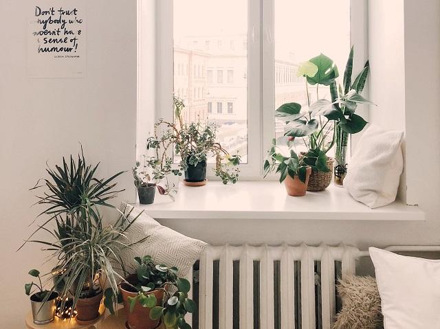 rośliny mieszkanie